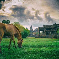 Equitation à Siem Reap