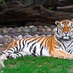 Le zoo de Phno Tamao